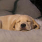 Lakky Dog